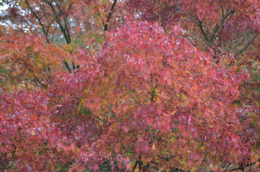 equinox colours